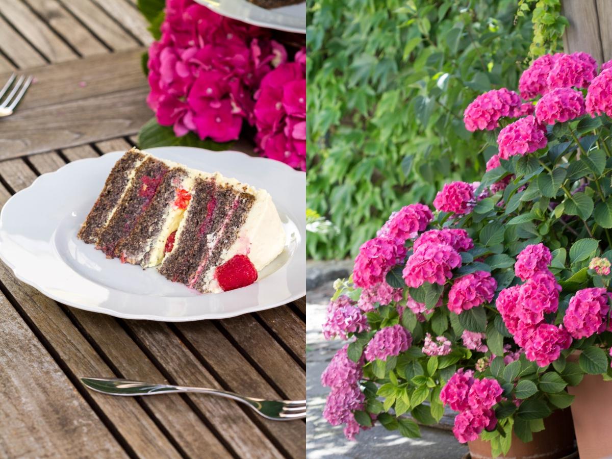 FAIBLE_Lemon-Poppyseed-Cake with Raspberries_lchf_7